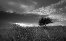 Solamente árbol en el campo foto de archivo