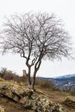 Solamente árbol en el top de la colina foto de archivo