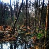 Solamente en bosque Imagenes de archivo