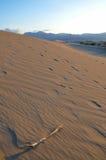 Solamente en el desierto Imagen de archivo libre de regalías