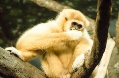 Solamente en el parque zoológico imagen de archivo libre de regalías