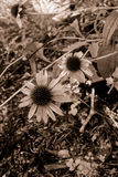 Solamente en un jardín Fotos de archivo