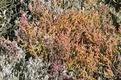 Solankowa łąka przy Północnym morzem w jesieni Zdjęcia Royalty Free