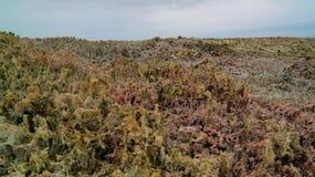 Solankowa tekstura wśrodku Dallol krateru Danakil powulkanicznej depresji Etiopia, Daleko Zdjęcie Stock