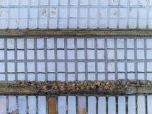 Solankowej produkci niecek powietrzny pionowo widok w Ria Formosa bagnach, Algarve Zdjęcia Stock