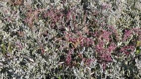 Solankowy bagno w jesieni Zdjęcia Royalty Free