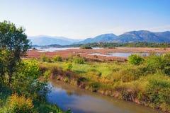 Solankowy bagno Widok specjalny rezerwat przyrody Solila Tivat, Montenegro Fotografia Stock