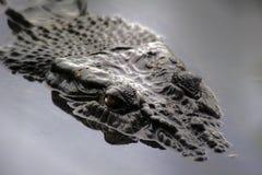 Solankowy krokodyl Zdjęcia Royalty Free