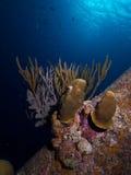 Solankowy molo filar 01 Zdjęcia Stock