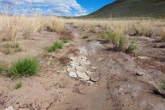 Solankowy step Fotografia Royalty Free