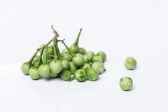 Solanum μούρων της Τουρκίας torvum Sw Στην άσπρη ανασκόπηση εκλεκτικός Στοκ εικόνες με δικαίωμα ελεύθερης χρήσης