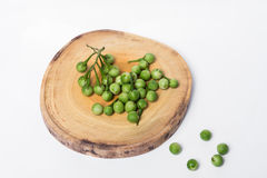 Solanum μούρων της Τουρκίας torvum Sw Στην άσπρη ανασκόπηση εκλεκτικός Στοκ Εικόνα