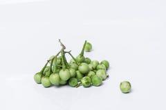 Solanum μούρων της Τουρκίας torvum Sw Στην άσπρη ανασκόπηση εκλεκτικός Στοκ εικόνα με δικαίωμα ελεύθερης χρήσης