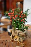 Solanum capsicastrum Stock Photos