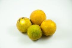 Solanum ferox Στοκ φωτογραφίες με δικαίωμα ελεύθερης χρήσης
