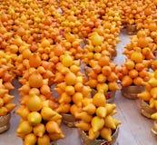 Solanum mammosum. Nipplefruit, titty fruit Stock Photos
