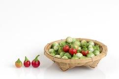 Solanum sanitwongsei Craib (Solanum trilobatum L.) Stock Photos