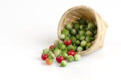 Solanum sanitwongsei Craib (Solanum trilobatum L.) Royalty Free Stock Photography