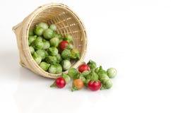 Solanum sanitwongsei Craib (Solanum trilobatum L.) Stock Image