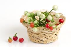 Solanum sanitwongsei Craib (Solanum trilobatum L.) Royalty Free Stock Image