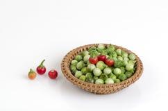 Solanum sanitwongsei Craib (Solanum trilobatum L.) Royalty Free Stock Images