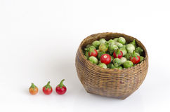 Solanum sanitwongsei Craib (Solanum trilobatum L.) Royalty Free Stock Photo