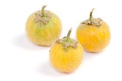 Solanum. stramonifolium Royalty Free Stock Photo