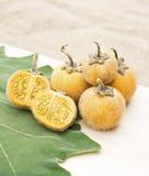 Solanum stramonifolium or Hairy-fruited eggplant. Solanum stramonifolium or Hairy-fruited eggplant on wooden Stock Photography