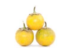 Solanum. stramonifolium Jacq. Stock Images