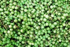 Solanum torvum at the market. Market for sale Stock Photos