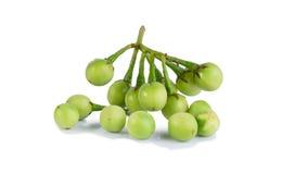 Solanum torvum. On white background royalty free stock images