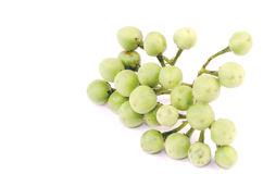 Solanum trilobatum Linn Royalty Free Stock Image
