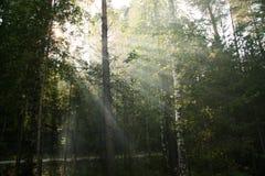 Solar beams. Beams of Light shine through canopy of trees Stock Image