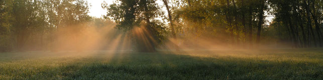 Solar beams. Foggy morning on a marge of a wood Stock Photo