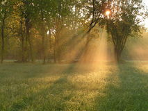 Solar beams. Foggy morning on a marge of a wood Stock Images
