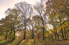 Solar beams making the way through a trees. Gold colored autumn trees line the road in a park Royalty Free Stock Photography