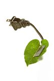 Solar cell. A leaf with a solar cell to make power Stock Images