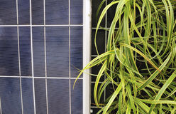 Solar Cell and Plants, PS-57399. Exterior Renewable Energy Solar Cell Solar Power panels, Detail Royalty Free Stock Photos