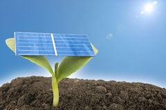 Solar cell on sprout Royalty Free Stock Photography