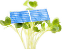 Solar cell on sprouts Royalty Free Stock Photography