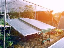 Solar cells for agriculture. Plant and Power electricity concept. Business and industrial concept stock photos