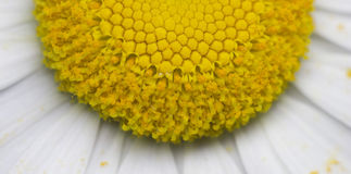 Solar cells of camomile Royalty Free Stock Photos