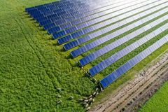 Solar collectors with grassing sheep stock images