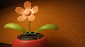 Solar dancing flower stock video