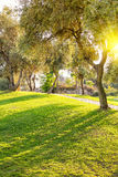 Lawn in city park under evening light Stock Image