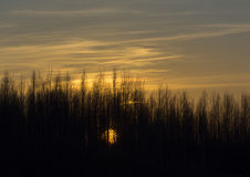 Solar disk at sunset sets over the trees, yellow clouds in the s Stock Image