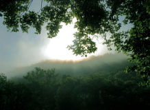 Solar Dreams. Tree on mountain bow in homage to force of solar sunrise stock image