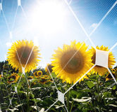Solar energy concept Stock Photography