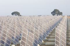 Solar energy field. Sunrise on a large group of photovoltaic panels and two trees Stock Photo