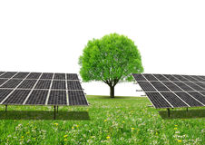 Solar energy panels and tree on meadow with copy space. Stock Photos